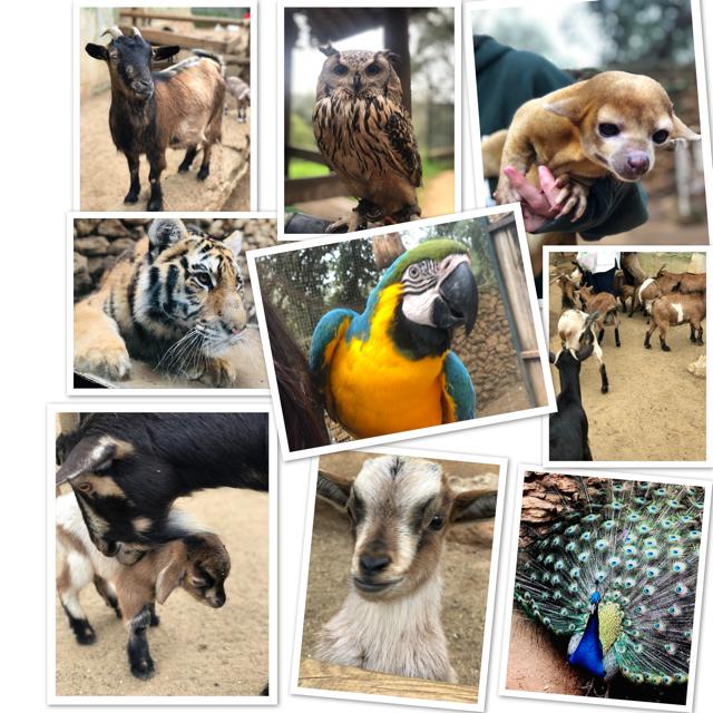 Castellar Zoo